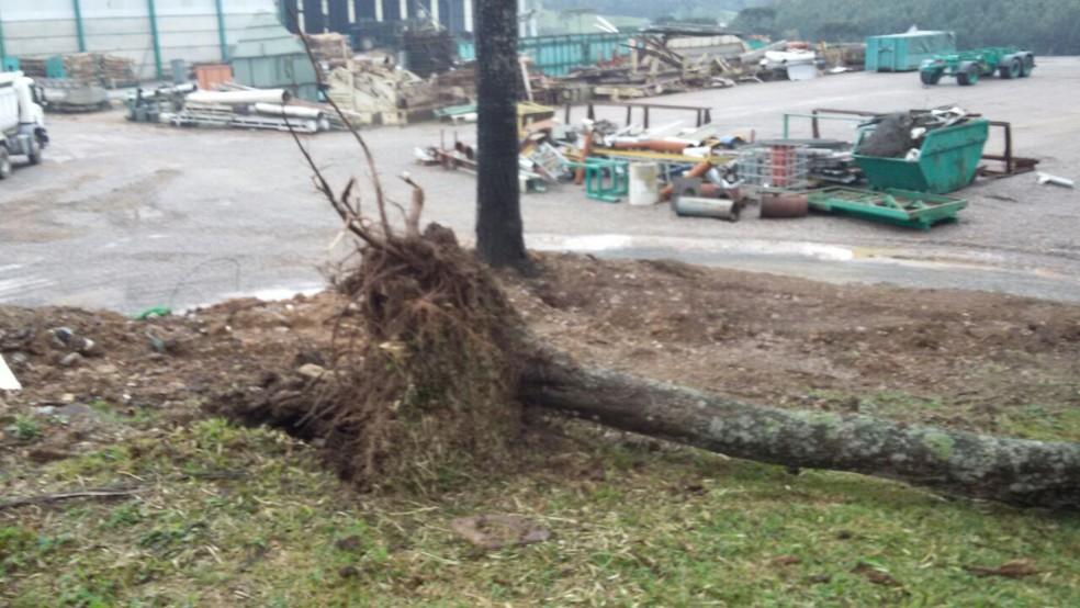 Raízes de árvores foram arrancadas durante tempestade (Foto: Nelson Kolbet/Defesa Civil)