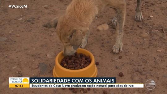 Estudantes de Casa Nova criam ração natural para alimentar cães de rua