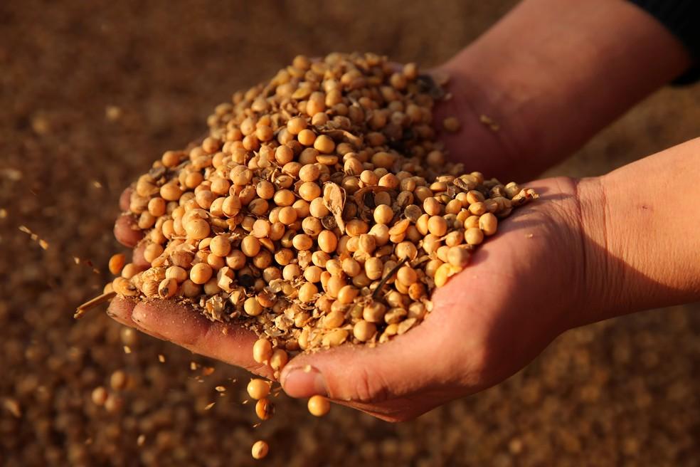 A soja está repleta de proteínas e é um potencial antioxidante — Foto: Ouro Safra/Divulgação