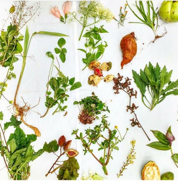 PANC: Plantas Alimentícias não Convencionais são o tema do evento do Sesc Pompeia, de abril a novembro de 2018 (Foto: Divulgação)