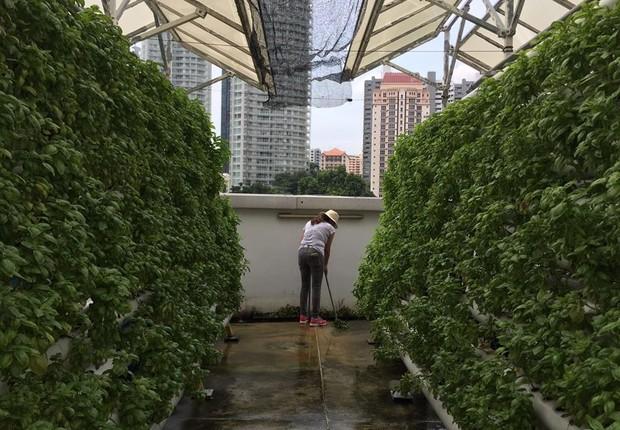 Fazenda urbana da ComCrop, em Cingapura (Foto: Reprodução/Facebook)