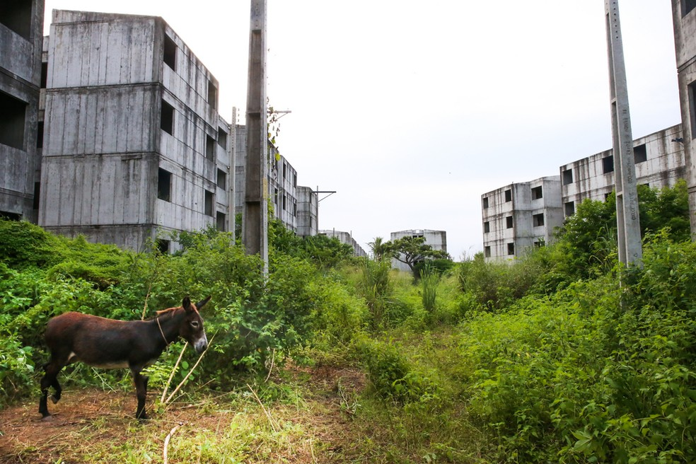 """Obras abandonadas do MCMV criaram """"bairro fantasma"""" dentro de Fortaleza — Foto: Rodrigo Gadelha"""