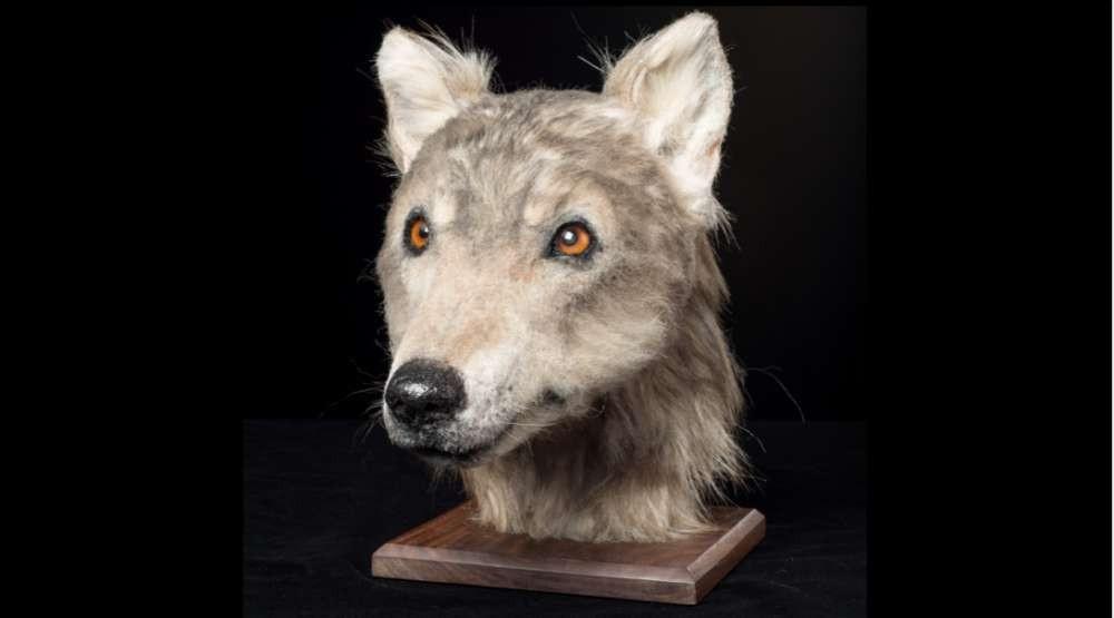 Usando uma tecnologia de reconstrução facial, Historic Environment Scotland (HES), conseguiu, pela primeira vez, revelar como era a face de um cachorro que viveu no período neolítico há mais de 4 mil anos atrás (Foto:  Historic Environment Scotland)