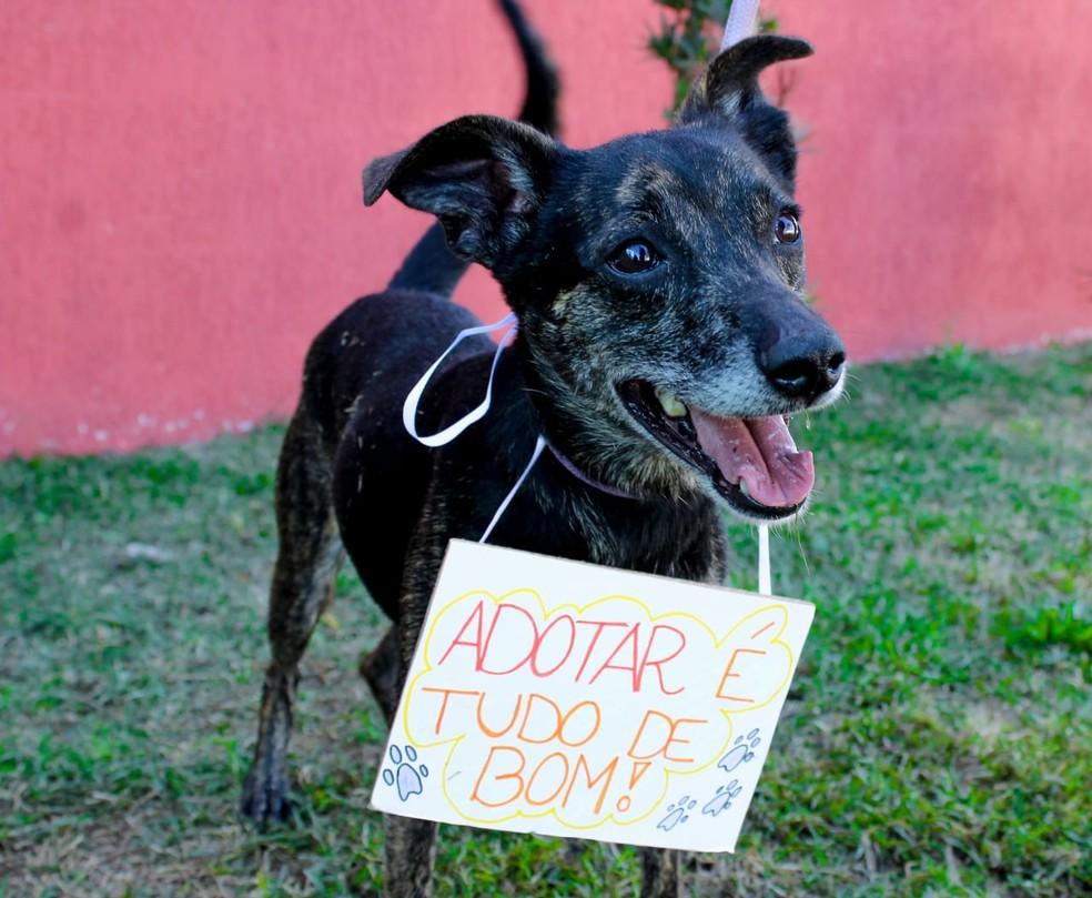 Felício foi abandona, se recuperou de uma lesão da pata e espera por um lar (Foto: Soraya Reis/ ONG Chico Pata)