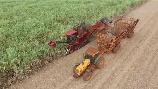 Falta de qualificação expõe trabalhador rural ao desemprego com fim da queima da cana em SP