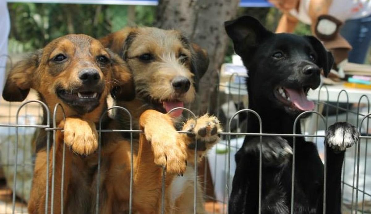 Shopping de Campinas recebe feira de adoções de animais neste domingo