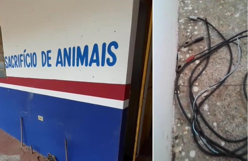 Xuxa, Zezo e deputados comentam denúncia de animais mortos por choque elétrico no Piauí — Foto: Portal Barras É Notícia