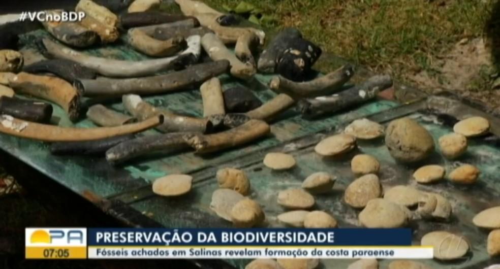 Fósseis com mais de 2 milhões de anos são encontrados nas praias de Salinópolis, no Pará — Foto: Reprodução/TV Liberal