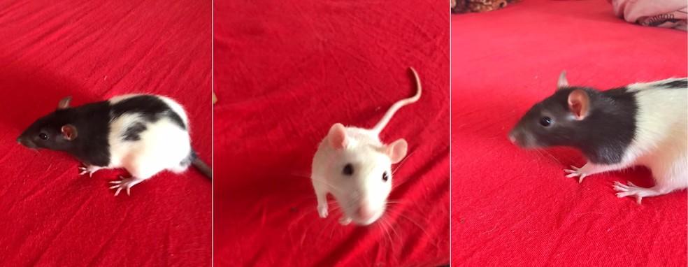 Especialista orienta sobre cuidados com roedores — Foto: Arquivo Pessoal