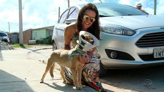 Cadela ferida por rojão é adotada após ser socorrida e passar por cirurgia em Rio Grande