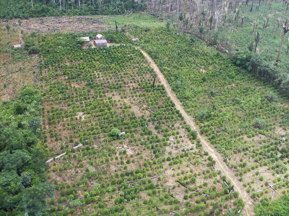 Fazendeiro é condenado a pagar R$ 3 milhões por desmatar área de floresta no PA — Foto: Reprodução / Ibama