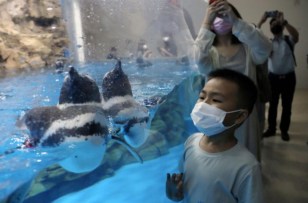 Visitantes usam máscarana reabertura de aquário na cidade de Taoyuan, em Taiwan, nesta sexta-feira (7)  — Foto: Ann Wang/ Reuters
