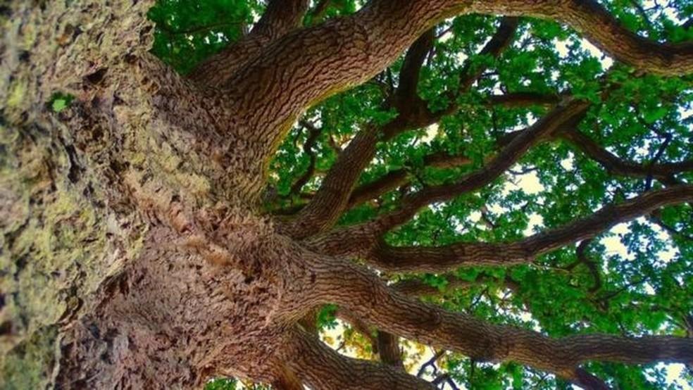 A perda de todas as árvores do mundo teria um profundo impacto sobre o clima — Foto: Getty Images/BBC
