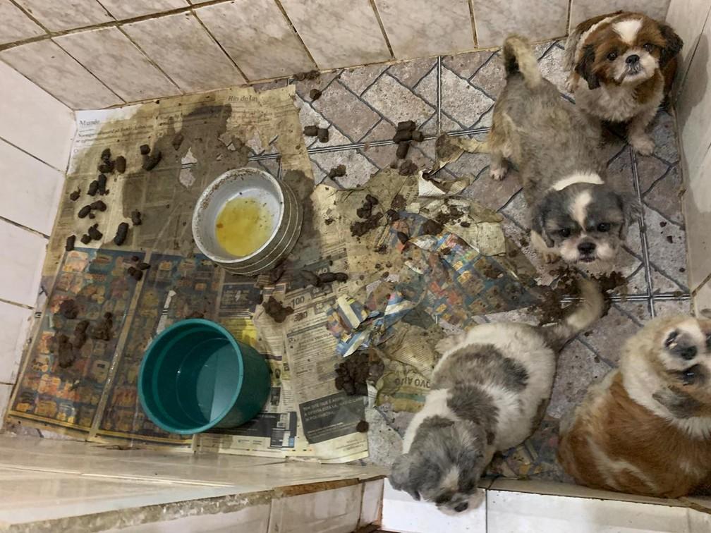 Cães ocupavam espaço exíguo cheio de fezes — Foto: OAB/RJ