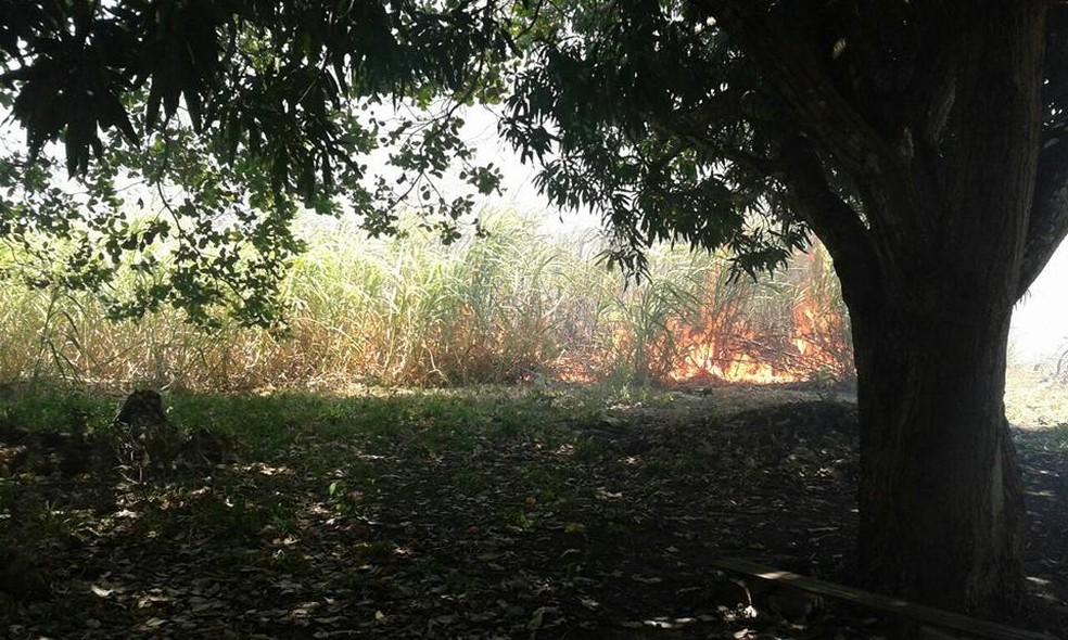Chamas alcançaram a vegetação no terreno do abrigo, onde estavam 34 cachorros (Foto: Cristiane Angélica/Ong Abrace)