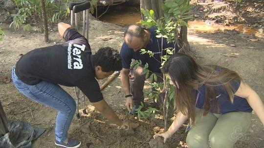Grupo Rede Amazônica realiza plantio de mudas para celebrar data