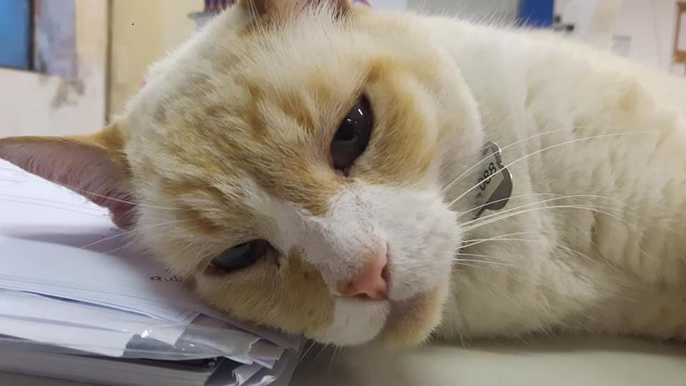 O mascote estava desaparecido desde o dia 8 de fevereiro — Foto: Arquivo Pessoal