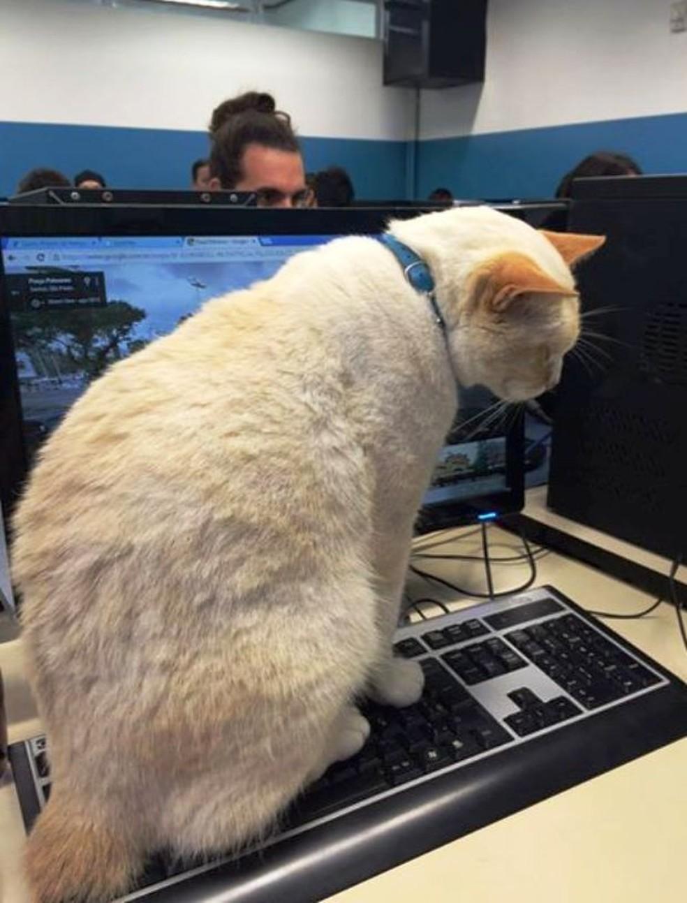 Branco adora ficar no laboratório da faculdade — Foto: Arquivo Pessoal