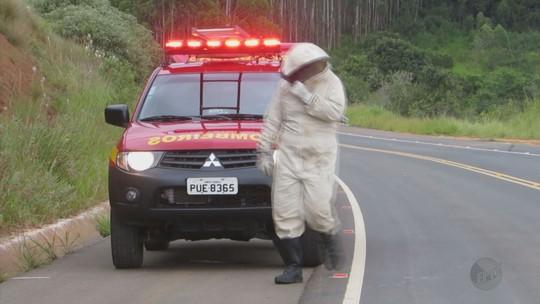 Homem fica em estado grave após capotar carro e ser atacado por abelhas em MG
