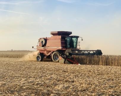 Safra americana e demanda chinesa derrubam preços da soja