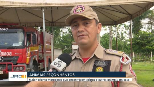 Corpo de Bombeiros alerta sobre risco de acidentes com animais peçonhentos em Rio Branco