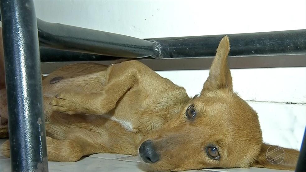 Cachorrinha é resgata após passar 3 dias presa em uma galeria de água em Corumbá. — Foto: Reprodução / TV Morena