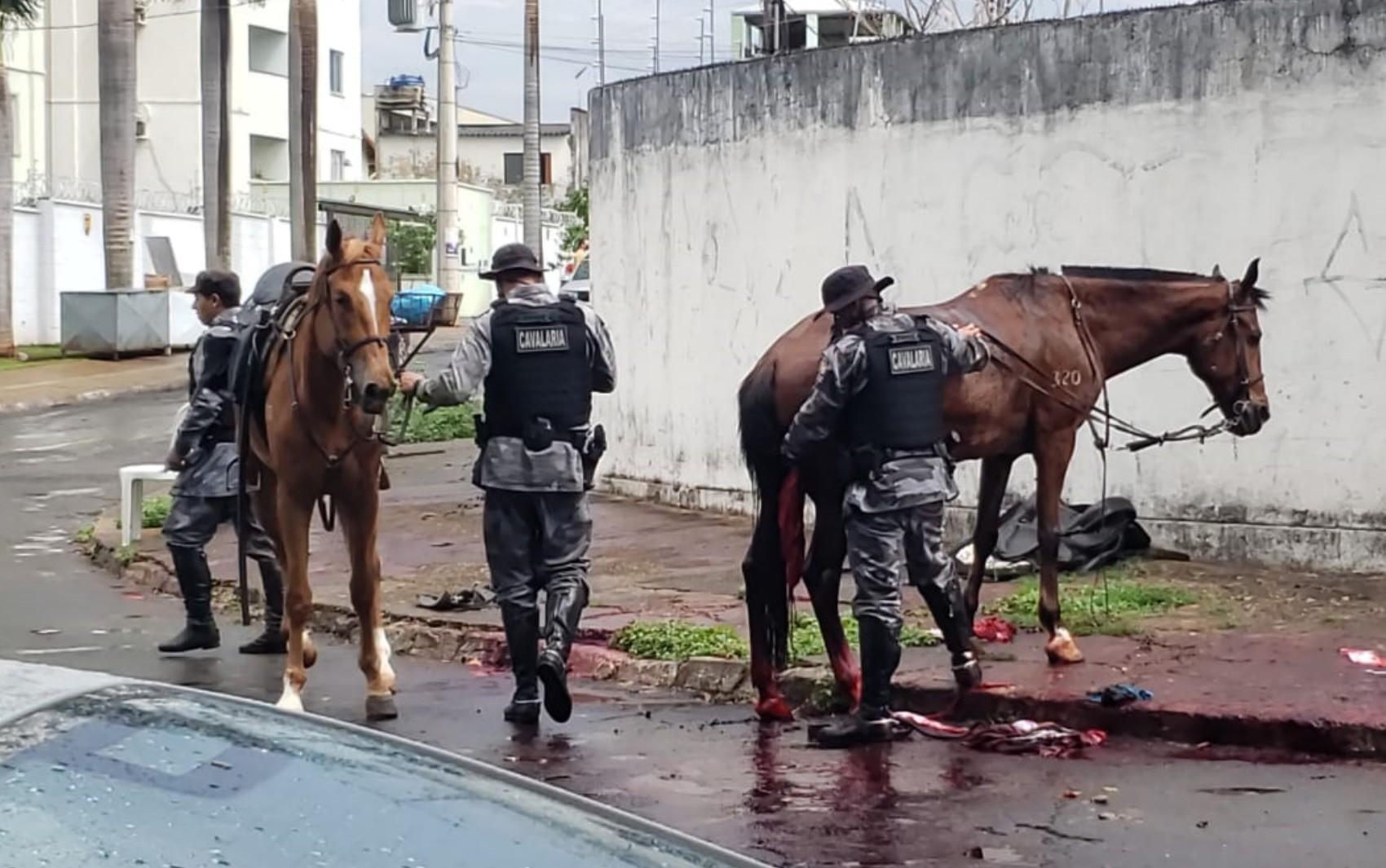 Égua da PM morre e policial se fere durante perseguição a casal suspeito de furtos, em Goiânia