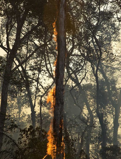 queimadas-amazonia-floresta-incendios-fogo (Foto: Emiliano Capozoli/Ed.Globo)