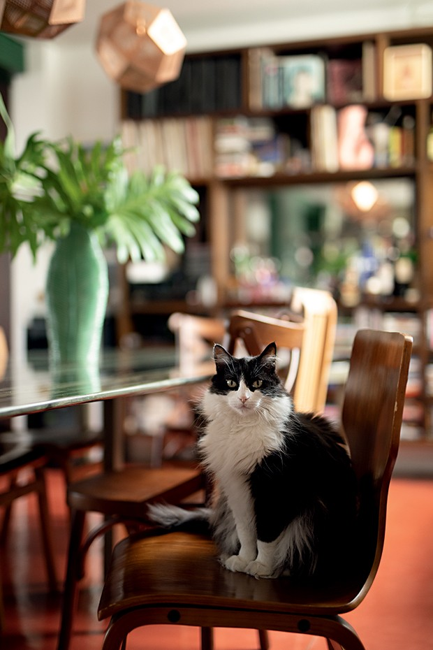 Lifestyle decor - A pet Morgana (Foto: Carol Gherardi)