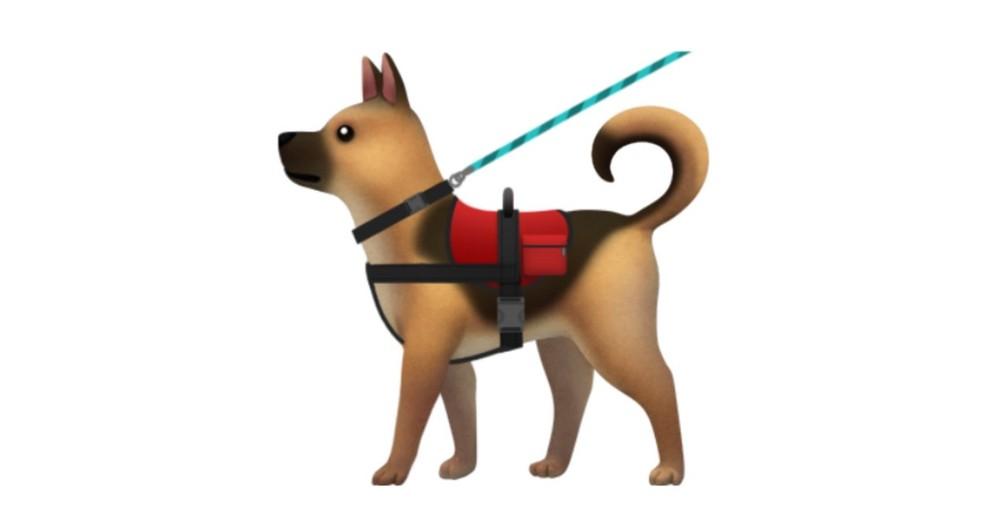 Cão de serviço com colete é destinado para identificar convulsões (Foto: Divulgação)