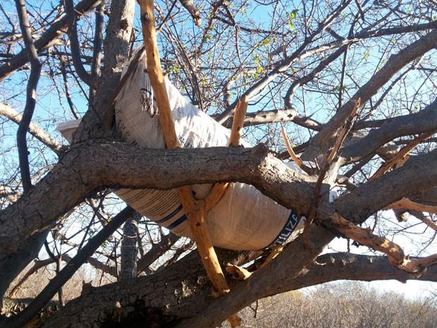 Maconha é achada em cima de árvore em Curaçá, na Bahia (Foto: Divulgação/PM)