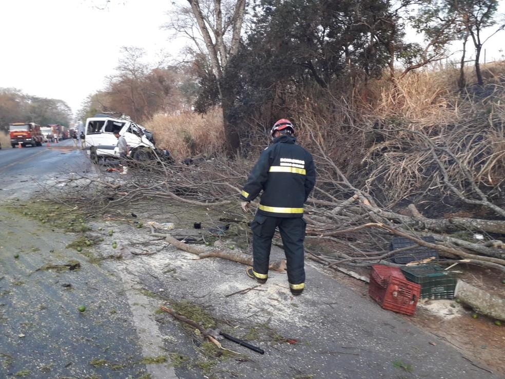 Galhos que estavam na pista em Patos de Minas (MG) foram cortados pelos bombeiros, assim como a árvore que apresentava comprometimento no tronco — Foto: Corpo de Bombeiros/Divulgação