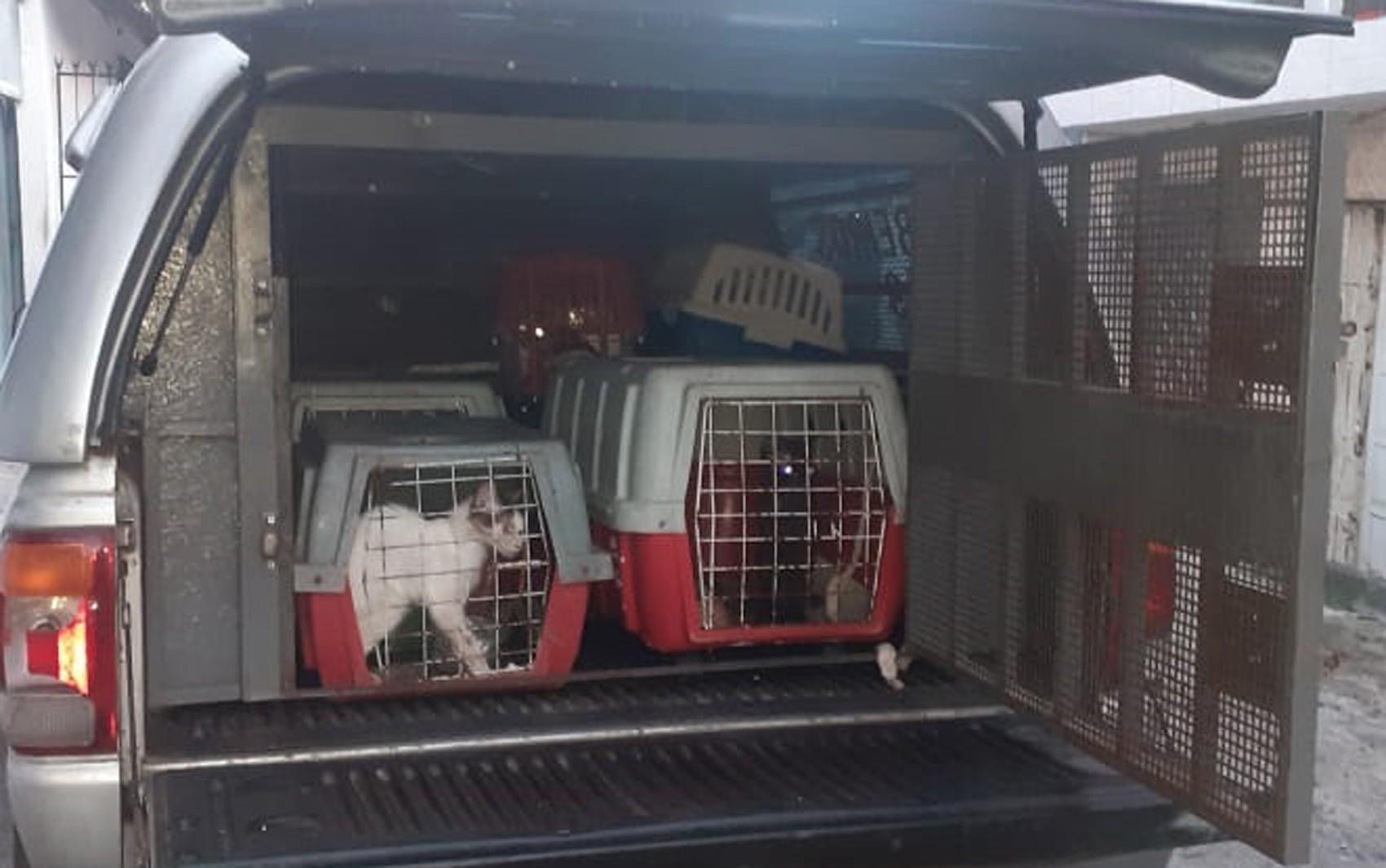 Mulher presa por supostos maus-tratos a animais em Salvador é solta: 'Ela vai provar inocência', diz advogado