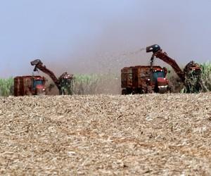 Perdas pela seca em 2021/22 serão menores do que em 2014, avalia Copersucar
