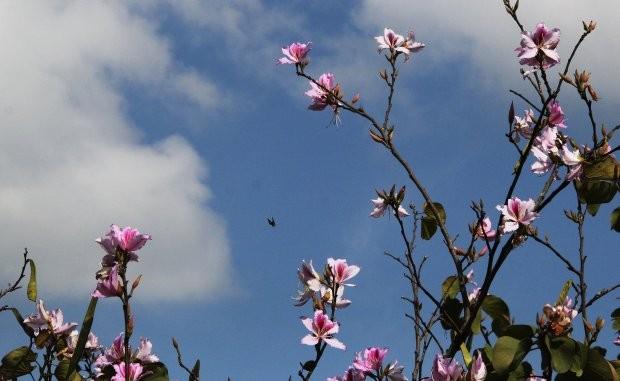 Primavera começa neste sábado e deve ser mais quente que o normal em SC, diz Epagri/Ciram