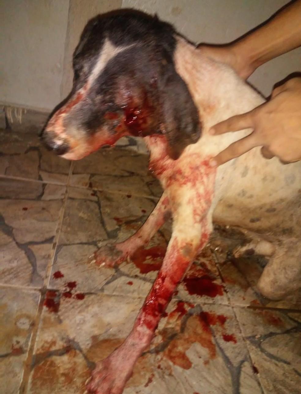 Segundo testemunhas, o cachorro estava perseguindo um PM em uma moto, que efetuou o disparo. — Foto: Divulgação