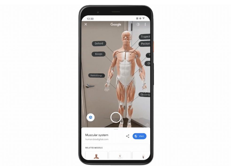 Google exibe vários sistemas do corpo humano em 3D no buscador do celular — Foto: Divulgação/Google