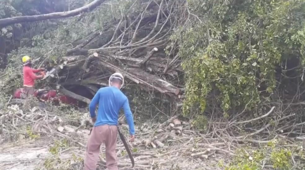 Homem sai ileso após carro em que ele estava ser atingido por árvore no sul da Bahia — Foto: Reprodução / TV Bahia
