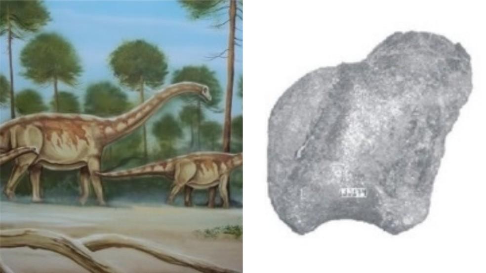 Representação do titanossauro e pedaço de vértebra encontrado na Ilha de Cajual, no Maranhão, nos anos 90 — Foto: Manuel Alfredo
