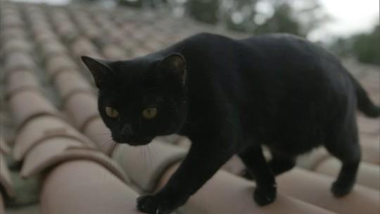 Gato preto é peça-chave dos segredos da nova novela das nove da Globo