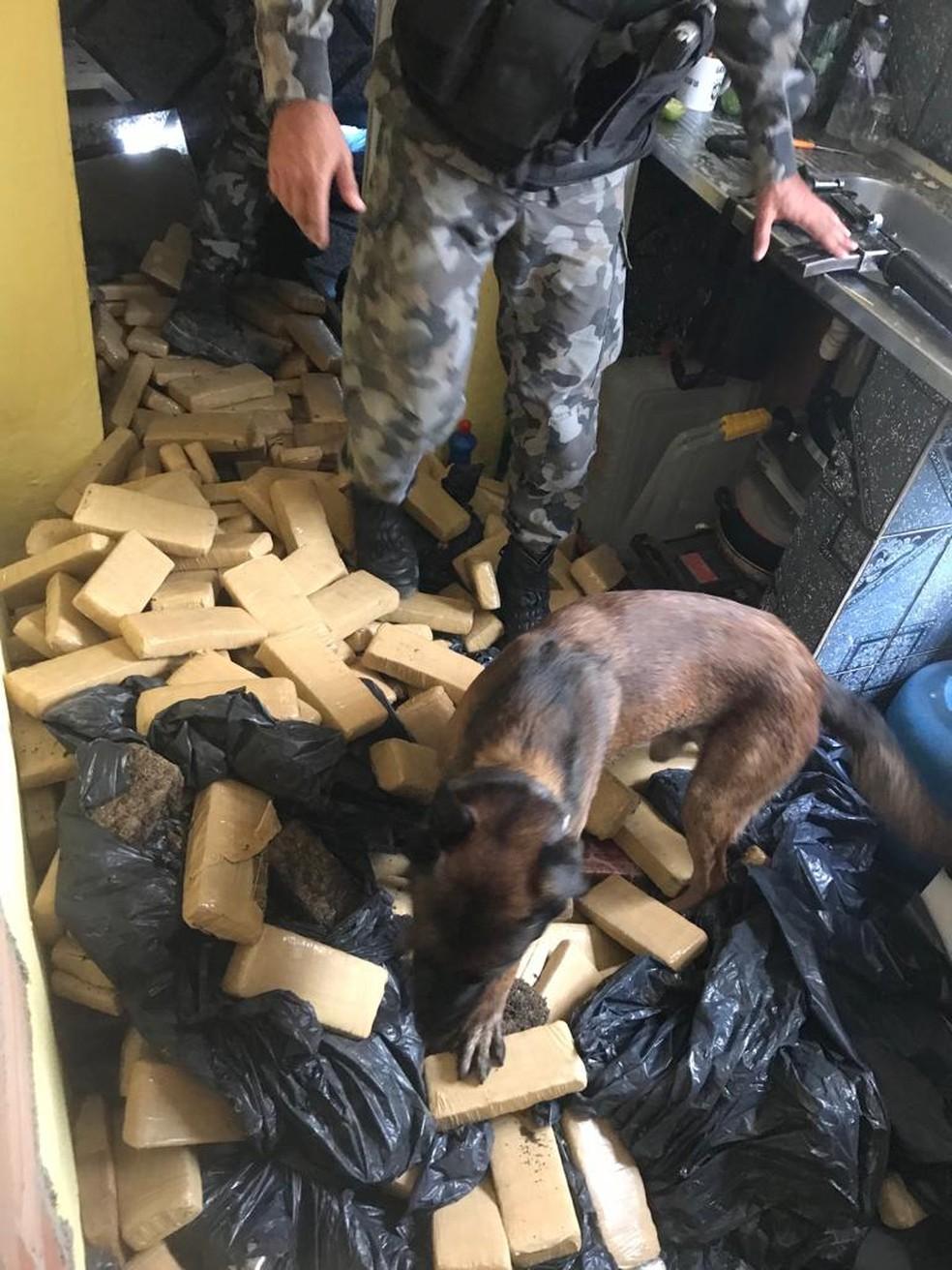 Cão do BAC encontra tabletes de maconha em Manguinhos — Foto: PMERJ