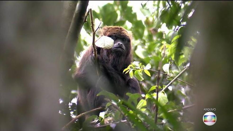 Mairiporã registra série de mortes de macacos por febre amarela (Foto: TV Globo/Reprodução)