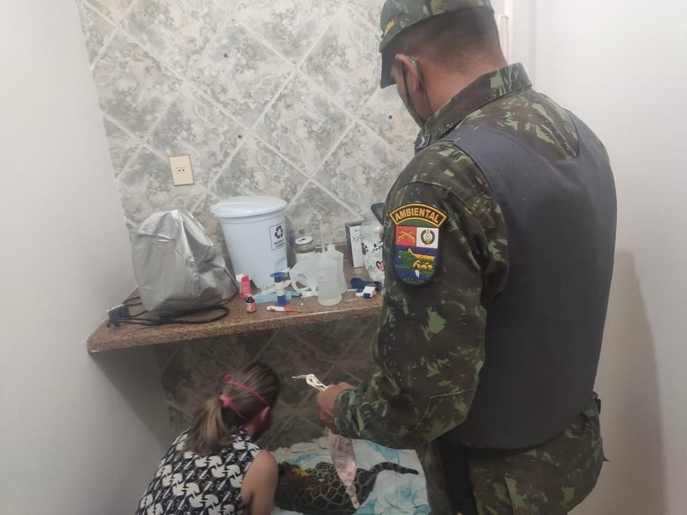 Onça-pintada se recupera em clínica de Cuiabá — Foto: Polícia Militar