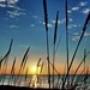 Papel de Parede: Beach Grass