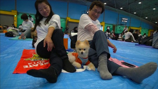 Pelo Mundo: Terapias alternativas são utilizadas para beneficiar os animais