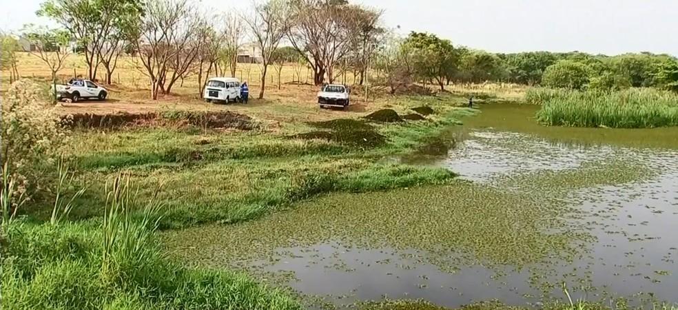 Represa de Votuporanga está tomada por plantas aquáticas  — Foto: Reprodução/TV TEM