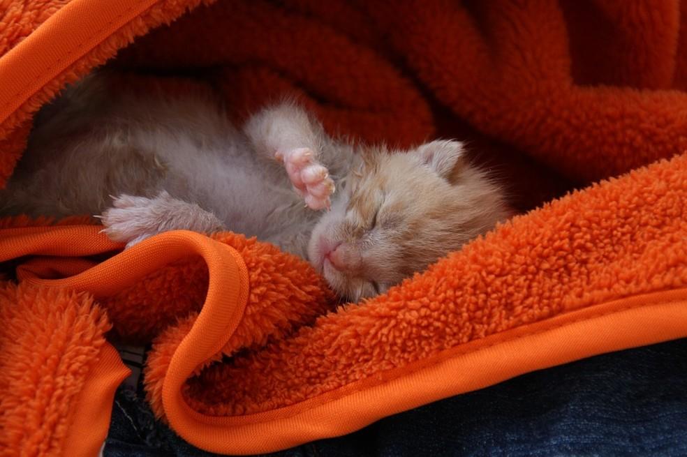Cães e gatos devem ficar ao menos dois meses com as mães (Foto: Divulgação)