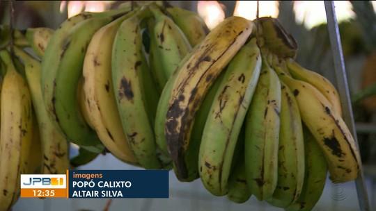 Pesquisa da UEPB aponta que sucupira é melhor que carbureto usado para amadurecer bananas