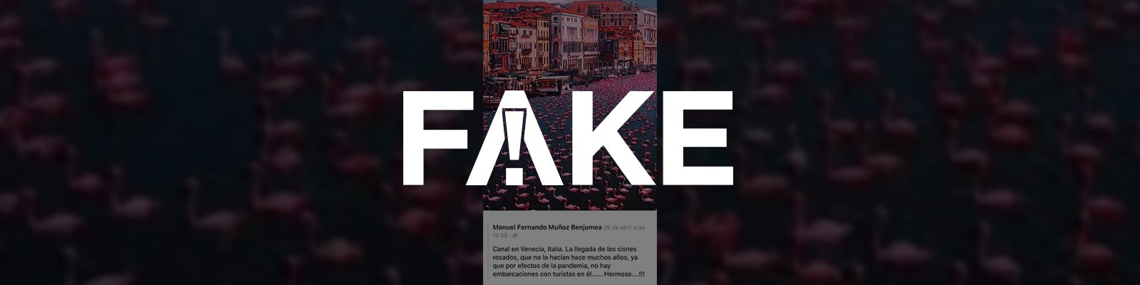 É #FAKE que flamingos ocuparam canal de Veneza em meio à pandemia do coronavírus