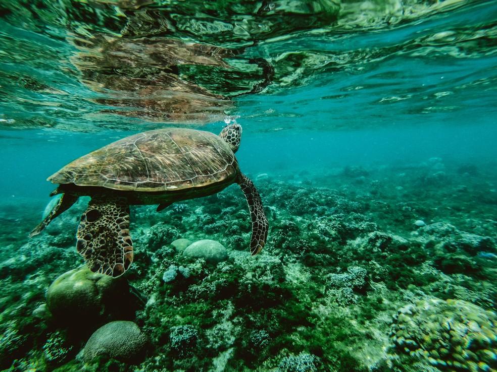 Animais marinhos não conseguem se adaptar a um novo status em seu habitat natural — Foto: Pexels